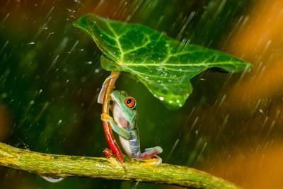 Ohh Noo :( It's Raining