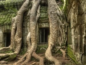 The Ta Prohm Temple Located at Angkor in Cambodia by Kyle Hammons