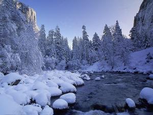 Fresh Snow Fallen on Trees Near Stream by Kyle Krause