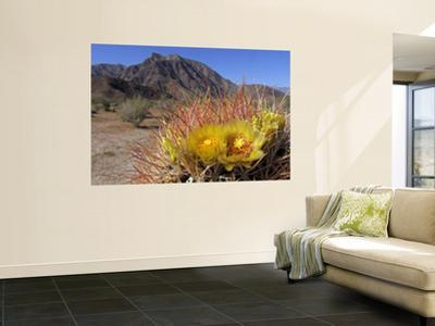 Blooming Barrel Cactus at Anza-Borrego Desert State Park, California, USA