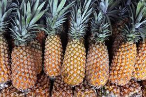 Pineapples Grown in the Amazon, Manaus, Brazil by Kymri Wilt