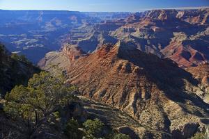 USA, Arizona, Grand Canyon Vista by Kymri Wilt
