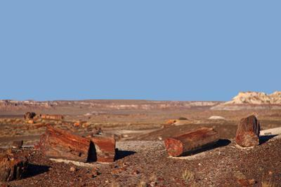 USA, Arizona, Petrified Forest National Park. Crystal Forest