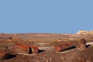 USA, Arizona, Petrified Forest National Park. Crystal Forest by Kymri Wilt