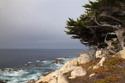 USA, California, Monterey. 17-Mile Drive Coast Near Ghost Tree