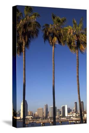 USA, California, San Diego. San Diego Skyline and Palm Trees