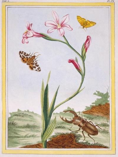 L'Ixia (Flesh-Coloured Ixia) and Stag Beetle, C.1776-Pierre-Joseph Buchoz-Giclee Print