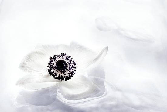 La Fleur Tranquille I-Jeanne Michel-Premium Photographic Print