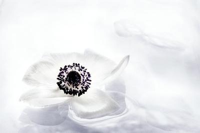 https://imgc.artprintimages.com/img/print/la-fleur-tranquille-i_u-l-q1aikkj0.jpg?p=0