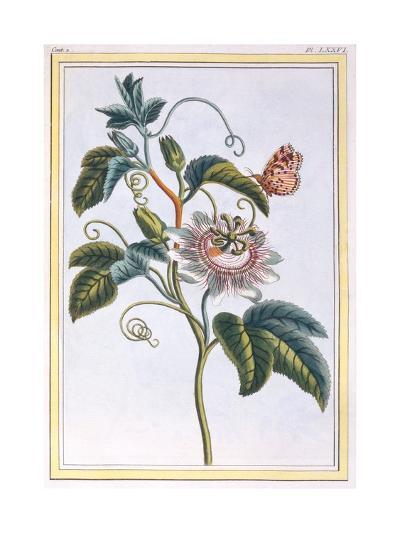 La Grenadille or Le Maracot (Blue Passion Flower), C.1766-Pierre-Joseph Buchoz-Giclee Print