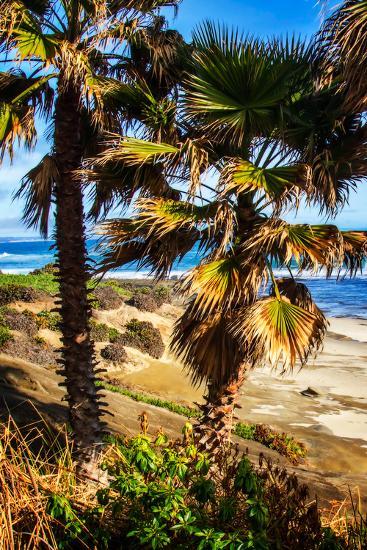 La Jolla Palms I-Alan Hausenflock-Photo
