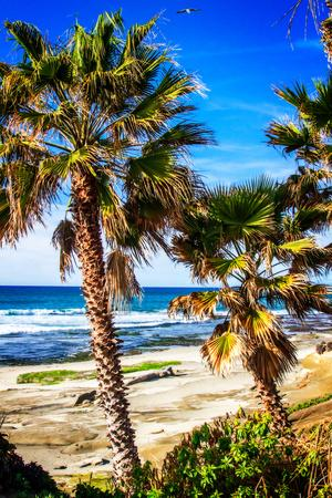 La Jolla Palms II-Alan Hausenflock-Photo