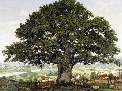 La Plaine D'Annecy-Chene Le Veterant Des Alpes-Jean Jacques Rousseau-Giclee Print