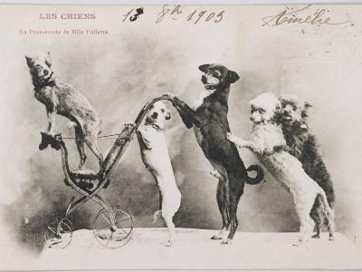"""""""La Promenade de Mademoiselle Follette"""", Four Dogs Take a Fifth for a Ride in a Pram- Like Vehicle--Photographic Print"""