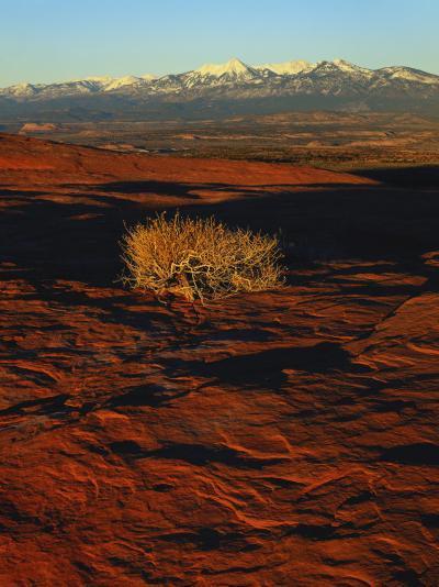 La Sal Mountains in Background, Canyon Rims, Canyonlands National Park, Colorado Plateau, Utah, USA-Scott T^ Smith-Photographic Print
