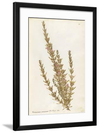 Labiatae or Lamiaceae--Framed Giclee Print
