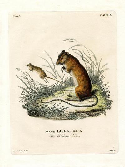 Labrador Jumping Mouse--Giclee Print