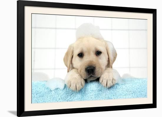 Labrador Retriever Puppy with in Bath with Soap Bubbles--Framed Photographic Print
