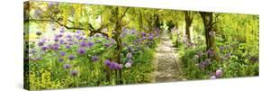Laburnum Trees at Barnsley House Gardens, Gloucestershire, England