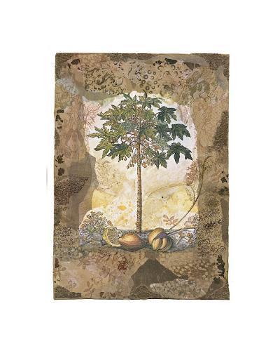 Lace and Papaya-David Hewitt-Giclee Print