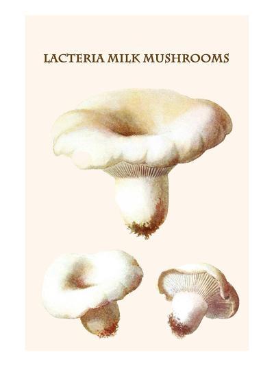 Lacteria Milk Mushrooms-Edmund Michael-Art Print