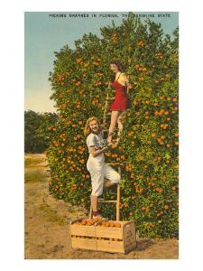 Ladies Picking Oranges, Florida