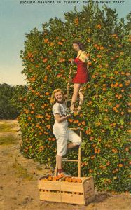 Ladies Picking Oranges, Florida