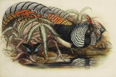 Lady Amherst's Pheasant-Henry Constantine Richter-Giclee Print