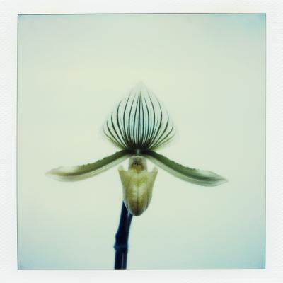 Lady Slipper Orchid-John Kuss-Photographic Print