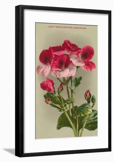 Lady Washington Geranium--Framed Art Print