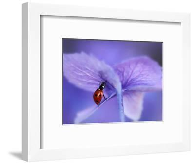 Ladybird on Purple Hydrangea-Ellen Van-Framed Photographic Print