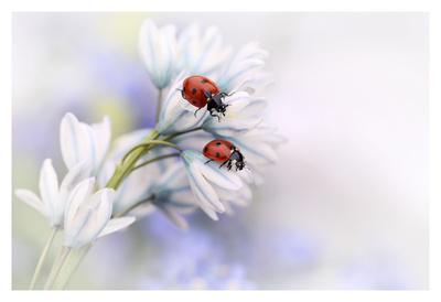 https://imgc.artprintimages.com/img/print/ladybirds_u-l-f8syme0.jpg?p=0