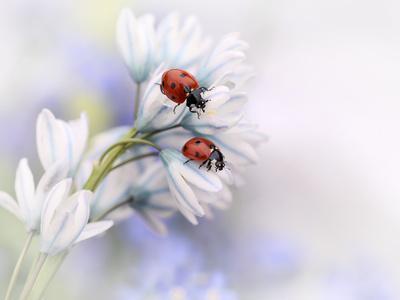 https://imgc.artprintimages.com/img/print/ladybirds_u-l-q19bavy0.jpg?p=0