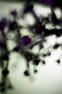 Vegetal / 4218, 2008 by Laetizia Bazzoni