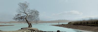 Lagoon Oak Tree-Alan Blaustein-Photographic Print