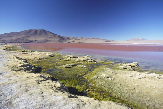 Laguna Colorada on the Altiplano, Potosi Department, Bolivia, South America-Ian Trower-Photographic Print