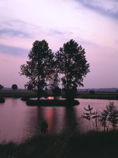 Lake, Island, Trees, Evening Mood-Thonig-Photographic Print