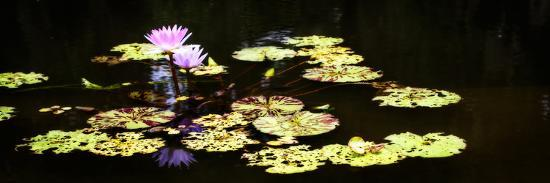 Lake Lilies I-Alan Hausenflock-Art Print