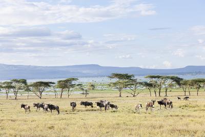 Lake Naivasha and Crescent Island Game Park, Naivasha, Kenya-Martin Zwick-Photographic Print