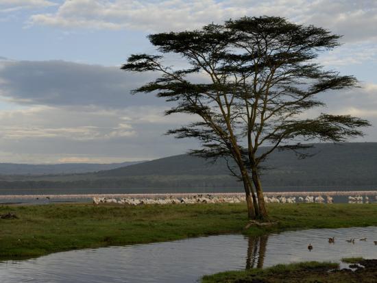 Lake Nakuru National Park, Kenya, East Africa, Africa-Groenendijk Peter-Photographic Print