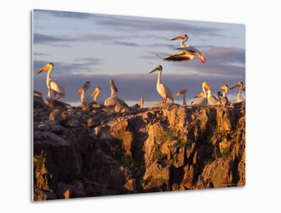 Lake Scenes, Birds at Sunset-Keith Levit-Metal Print