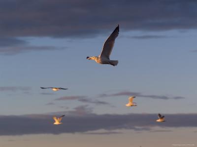 Lake Scenes, Birds at Sunset-Keith Levit-Photographic Print