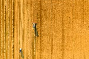 Harvester Machine Working in Field . Combine Harvester Agriculture Machine Harvesting Golden Ripe W by LALS STOCK