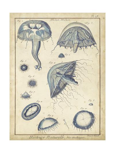 Lamarck Medusa I- Lamarck-Art Print