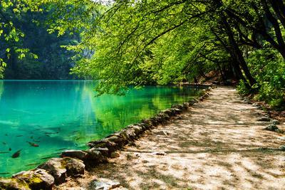 Path near A Forest Lake with Fish in Plitvice Lakes National Park, Croatia