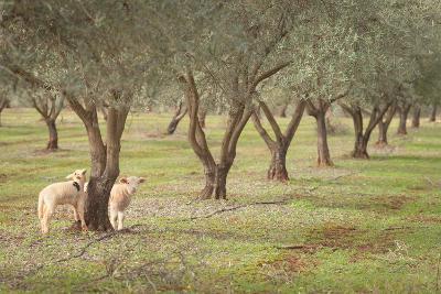 Lamb-AlexandraR-Photographic Print