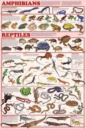 Laminated Amphibians and Reptiles Educational Animal Chart Poster