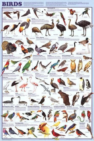 Laminated Birds Educational Animal Chart Poster--Laminated Poster