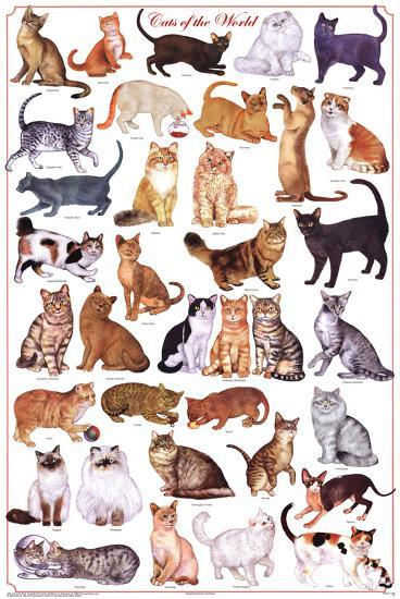 Laminated Cats of the World Educational Science Chart Poster--Laminated Poster