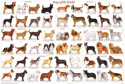 Laminated Dogs of the World Educational Animal Chart Poster